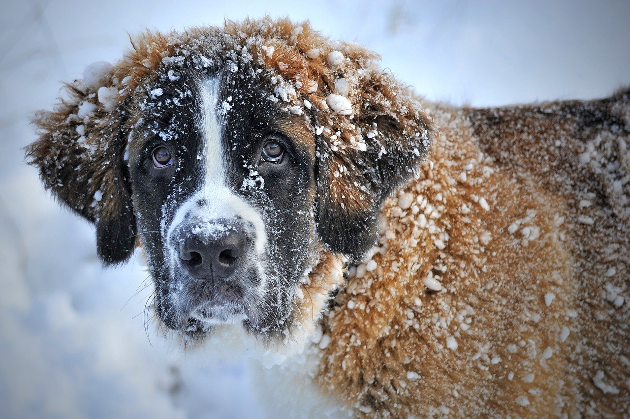 Собаки из муниципального приюта на Машкинском шоссе примут участие в благотворительном фестивале. Фото: pixabay.com