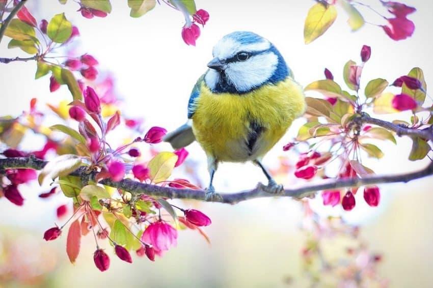 «Птичья выставка» открылась на Синявинской. Фото: pixabay.com